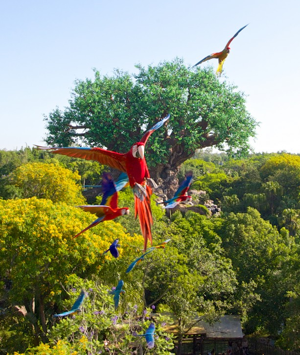 Macaws to Star in New Animal Kingdom Show This Summer